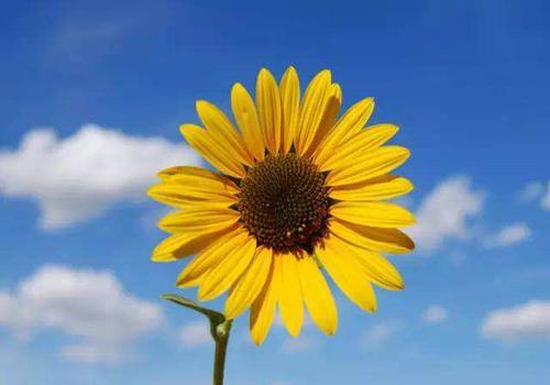 保持好心态,让生活活色生香